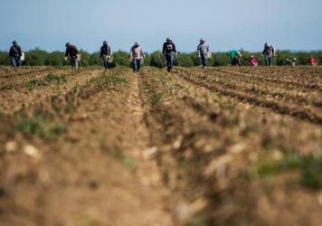 Workers pick asparagus in early April at Del Bosque Farms in Firebaugh, Calif. This year, some farmers in the state will get water, others won't, based on when their land was first irrigated.