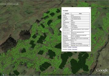 Hawaiian Legacy Hardwoods has created an Internet interface so customers can zoom in and view information about specific koa trees from their computers.
