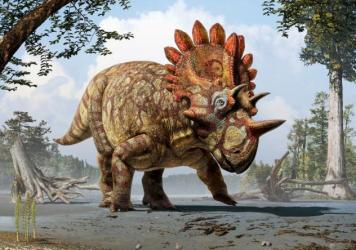Artistic life reconstruction of the new horned dinosaur <em>Regaliceratops peterhewsi</em> in the palaeoenvironment of the Late Cretaceous ofAlberta, Canada.