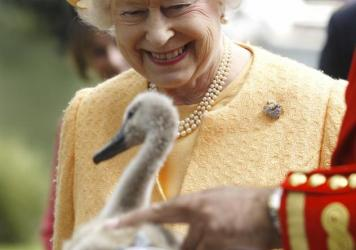 By law, all wild swans in Great Britain belong to Queen Elizabeth.