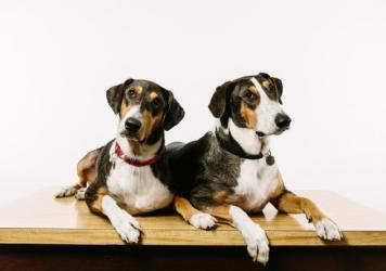 Ken (left) and Henry were created using DNA plucked from a skin cell of Melvin, the beloved pet of Paula and Phillip Dupont of Lafayette, La.