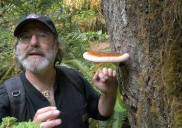 Paul Stamets cultures mycelium at his laboratory near Olympia, Wash.