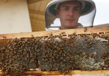 Beekeeper Rob McFarland (photographed last year) inspects the beehive he keeps on the roof of his Los Angeles house. The Los Angeles City Council voted unanimously on Wednesday to allow residents to keep beehives in their backyards.