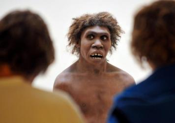 Neanderthals, represented here by a museum's reconstruction, had been living in Eurasia for 200,000 years when <em>Homo sapiens</em> first passed through, and the communities intermingled. The same genes that today play a role in allergies very likely fo
