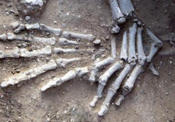 The position of the hands of this skeleton, one of several excavated at Nataruk, suggests her wrists may have been bound. This woman, found reclining on her left elbow, with fractures on the knees and possibly the left foot, was found surrounded by fish.