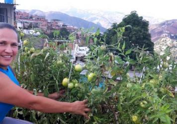 Mileidis Bolivar shows off the tomatoes that she grows on her rooftop garden in a Caracas slum.