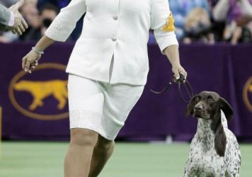 "CJ, a German shorthaired pointer, was named best in show at the 140th Westminster Kennel Club dog show. Owner Valerie Nunes-Atkinson of Temecula, Calif., said from the time CJ was a puppy, she knew he had ""that something extra."""