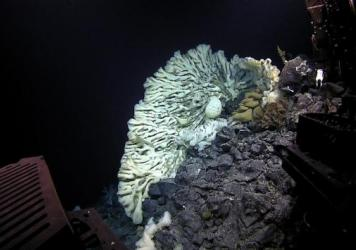 The massive sponge photographed at a depth of 2117 meters in the Papahānaumokuākea Marine National Monument by <strong>a</strong> the ROV <em>Deep Discoverer</em> and <strong>b</strong> its companion ROV <em>Seirios</em>