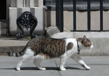 Larry, the chief mouser to the Cabinet Office, prowls outside the door of No. 10 Downing St. in London earlier this month.