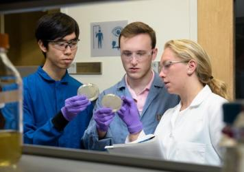 Christian Choe, Zach Rosenthal, and Maria Filsinger Interrante, who call themselves Team Lyseia, strategize about experiments to test their new antibiotics.
