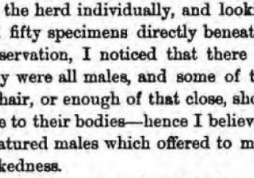 Henry Wood Elliott comments on walruses on Punuk Island in 1874, from his book <em>Our Arctic Province.</em>