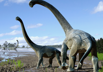 The newly discovered dinosaur species <em>Savannasaurus elliottorum</em> was about half the length of a basketball court and lived some 95 million years ago.