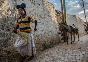 A girl with her donkeys in the streets of Harar, Ethiopia.
