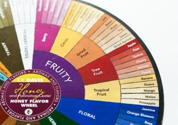 """Edgar Chambers says flavor is multidimensional, and the standard wheel doesn't adequately reflect that concept. He's advocating a """"flavor tree"""" instead."""
