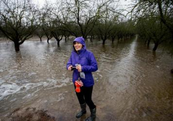 Helen Dahlke, a scientist from the University of California, Davis, stands in an almond orchard outside Modesto that's being deliberately flooded. This experiment is examining how flooding farmland in the winter can help replenish the state's depleted aquifers.