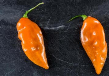 "New York City's Blue Hill restaurant is the biggest buyer of ""Habanadas,"" a habanero bred to be heatless, so the focus is on its melon-like flavor."