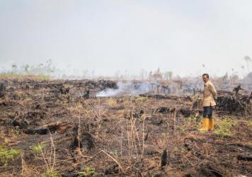 Smoke rises from smoldering fires on peat land in the village of Punggur Kecil, West Kalimantan Province. Despite being illegal, clearing peat land by fire remains widespread in Indonesia, as it is the cheapest way to clear land for agriculture and indus