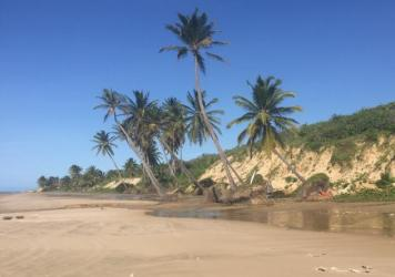 Felled coconut trees littered with bottles and other garbage on the Brazil coast.