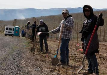 The workers planting apple trees at this orchard in Wenatchee, Wash., came to the U.S. on temporary visas for farm workers.
