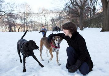 Researcher Alexandra Horowitz plays with her dogs Finnegan and Upton. She studies how dog's sense of smell influences their view of the world.