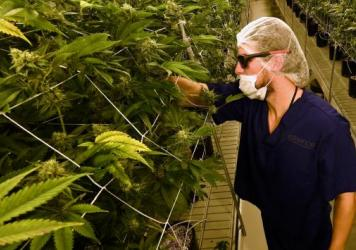 """A man tends to marijuana plants at a 54,000-square-foot marijuana cultivation facility in Las Vegas. In Nevada's first weekend of recreational pot sales, """"well over 40,000 retail transactions"""" were carried out, tax officials say."""