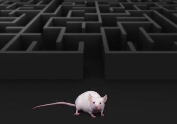 """For a rat, """"metamemory"""" is about knowing whether you remember that predator in the distance, researchers say. For people, knowing what we don't know can be especially useful in navigating social interactions."""