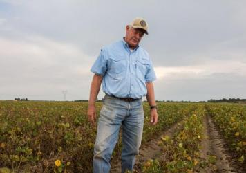 "David Wildy, a prominent Arkansas farmer, in a field of soybeans that were damaged by dicamba.  He says that ""farmers need this technology. But right is right and wrong is wrong. And when you let a technology, a pesticide or whatever, get on your neighbor, it's not right. We can't do that."""
