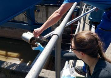 Researchers collect a sample at the Werdhölzli wastewater treatment plant in Zurich, as part of an Eawag research project exploring the concentration of various metals in treated wastewater.