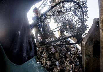 Captain Shpend Berisha, left, at the helm of the Prestige Oysters boat The Diplomat while Francisco Vasquez, center, and Ekrem Sahiti pull in oysters in Galveston Bay.