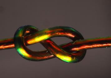 Scientists are studying how some knots perform better than others, like this figure-eight knot tied using a special fiber that changes color under strain. Regions of high strain (green, yellow) can be easily distinguished from sections of the knot at low