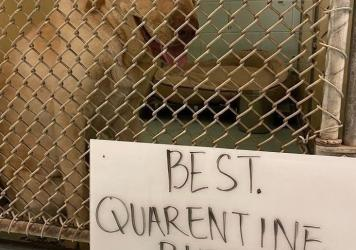 Across the country, the coronavirus has forced many animal shelters into crisis mode. Above, a dogs at the Humane Society of Harlingen, Texas which has since found a home.