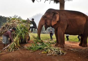 Mahouts feed elephants at the Elephant Nature Park in Chiang Mai in March.