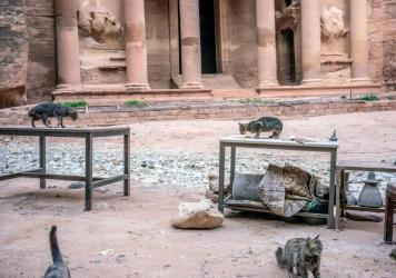 Cats overtake an empty tourist shop in Jordan's ancient city of Petra.