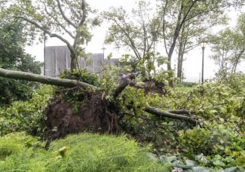 Tropical Storm Isaias downed wires and uprooted trees, like this one in New York City, leaving millions of customers without power in parts of the Mid-Atlantic and Northeast on Wednesday. The governors of Connecticut and New York have each declared a sta