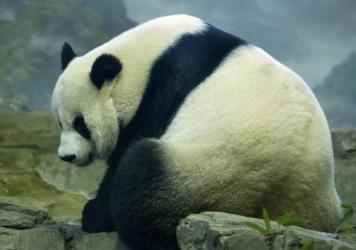 The National Zoo in Washington, D.C., says an ultrasound taken Friday showed what could be signs of a fetus in its panda Mei Xiang.