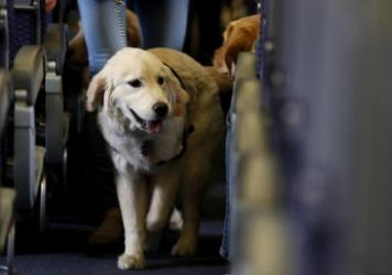 A service dog onboard a United Airlines plane at Newark Liberty International Airport in 2017. The Department of Transportation says it will require service dogs to be flown free of charge, but not emotional support animals.