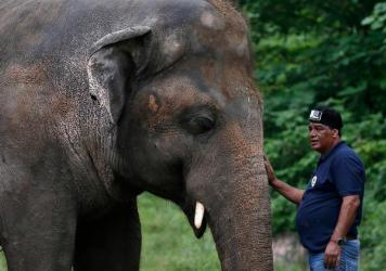 Dr. Amir Khalil, a veterinarian from the international animal welfare organization Four Paws International, comforts Kaavan during his examination at the zoo in Islamabad, before leaving for Cambodia.