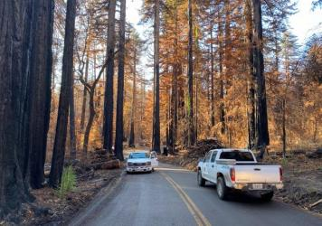 These days only park rangers and loggers are allowed in to Big Basin Redwoods State Park following a devastating wildfire that destroyed most of the infrastructure in California's oldest and one of its most iconic state parks. Big Basin is home to the la