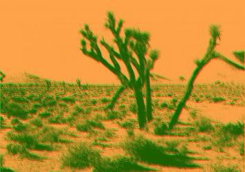 https://knpr.org/desert-companion/2020-01/shifting-lands