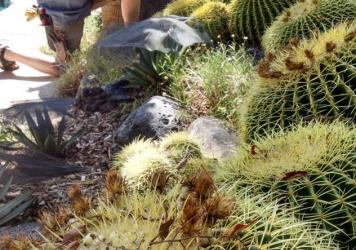 Norm Schilling surveys a new line up of cactus and agave in his yard