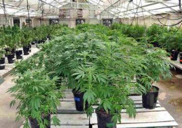 Marijuana growhouse